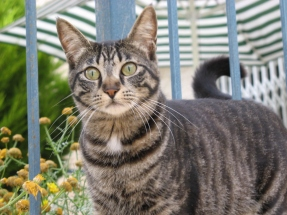 cat2007_05_16
